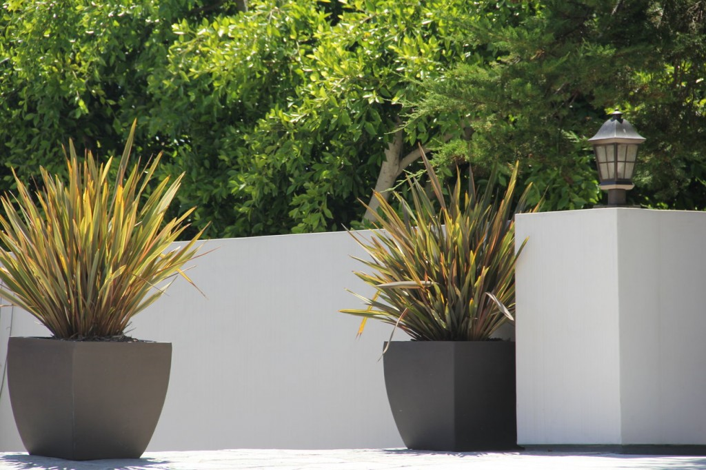 Containers for plants garden design landscapes for Modern low maintenance plants